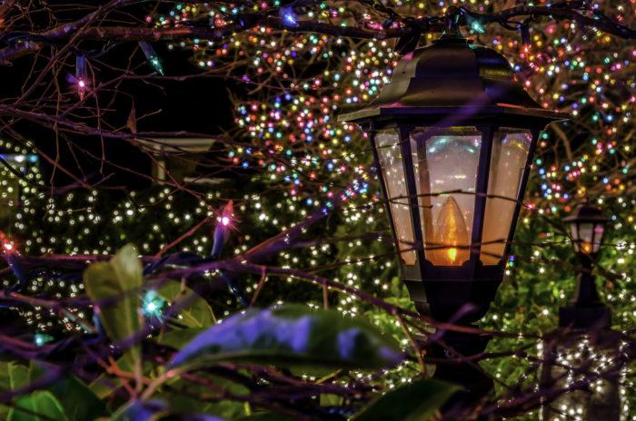 garden lights van dusen garden lights bellair tours adventures